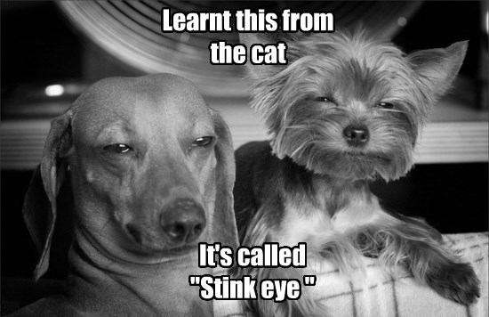 dogs captions funny - 8562903040