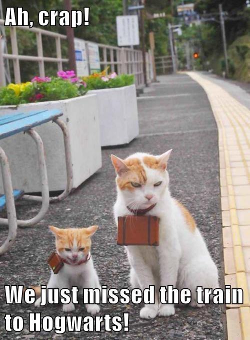 animals Harry Potter captions Cats funny - 8563082752