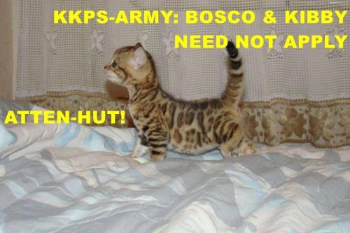 KKPS-ARMY: BOSCO & KIBBY NEED NOT APPLY ATTEN-HUT!