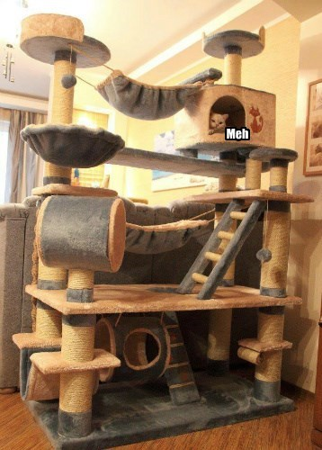 cat tree meh caption Cats funny - 8563198208
