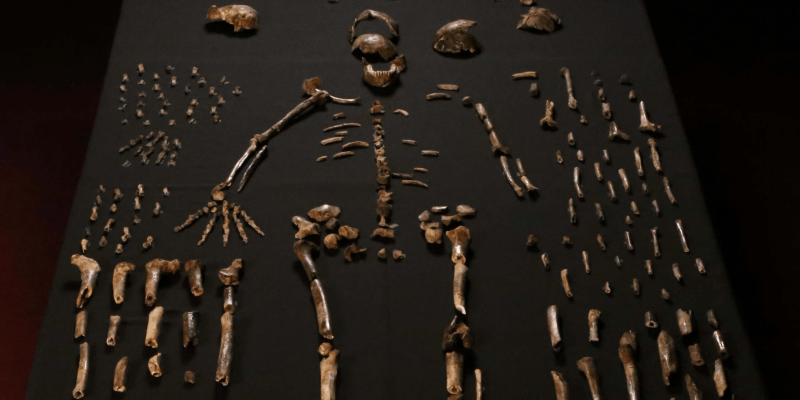 Scientists find a new species of hominid