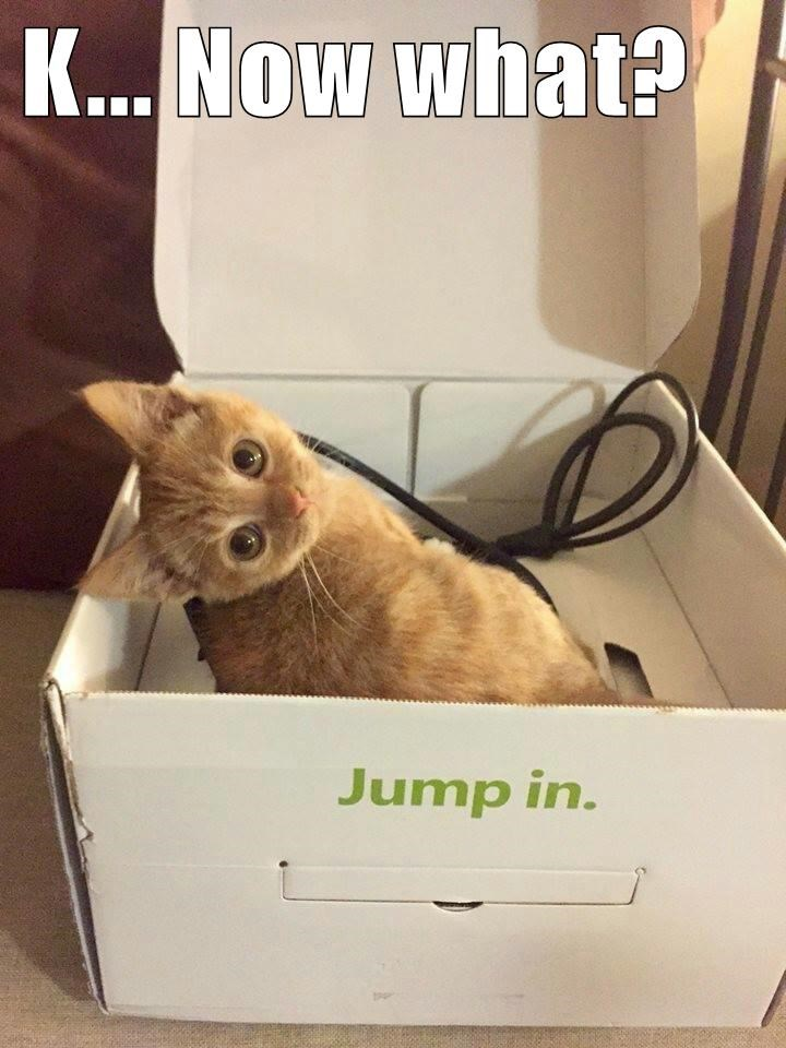animals box caption Cats funny - 8563353600