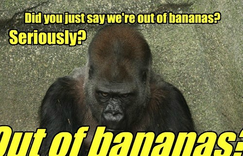 captions,funny,gorilla