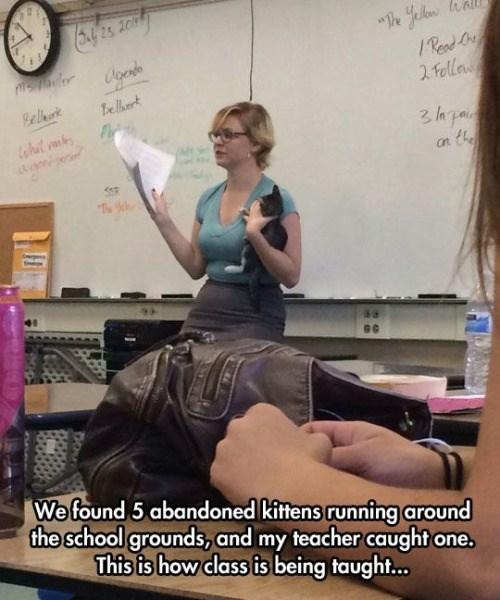 school-fails-cat-got-your-teacher