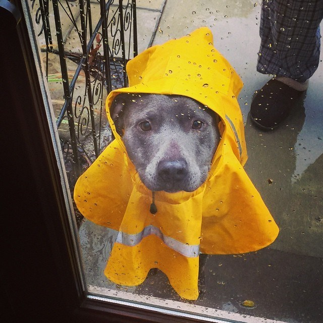 cute dogs image Can You Open the Door, Please? It's Very Rainy Out Here