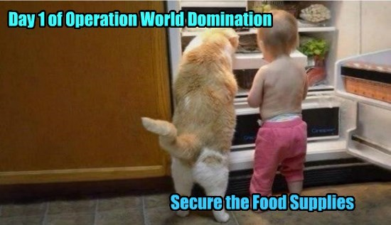 Cats funny thumbs world domination - 8563683840
