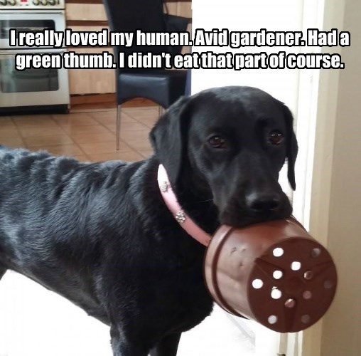 dogs captions funny - 8563695360