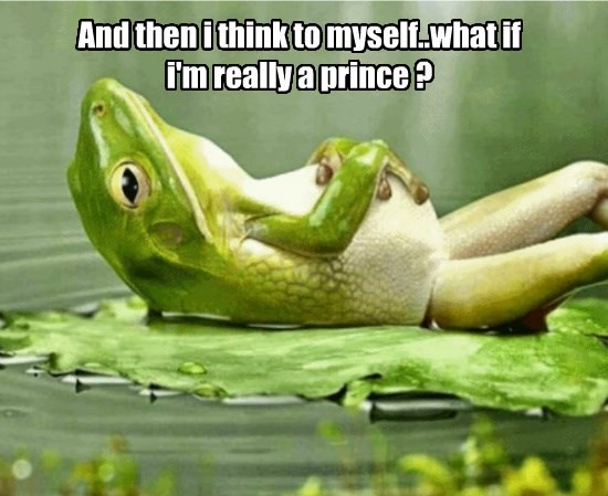 captions funny frogs - 8563786240