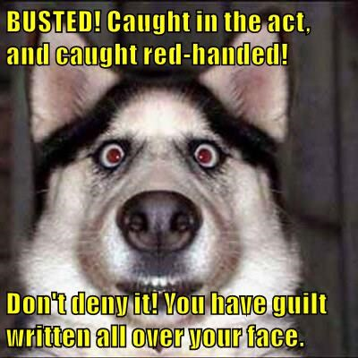 BUSTED! Caught in the act, and caught red-handed!  Don't deny it! You have guilt written all over your face.