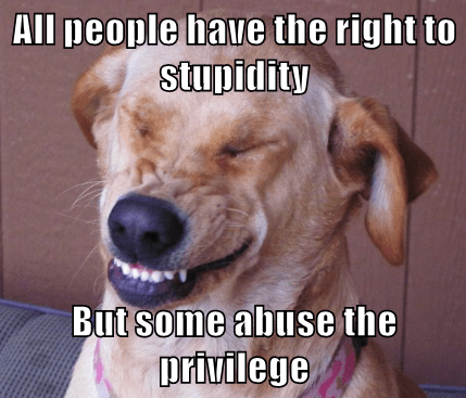 animals dogs caption stupidity funny - 8563865088