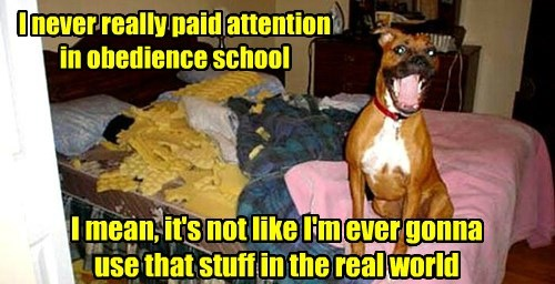 dogs,school,real life,obedience,caption