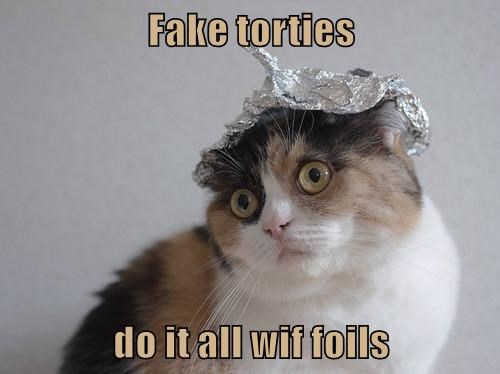 animals hairstyle foil caption Cats funny - 8564240896