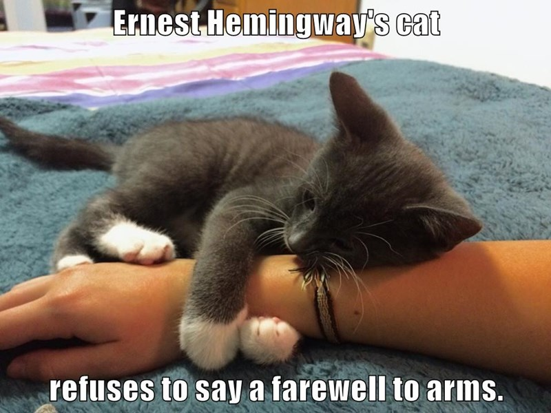 Ernest Hemingway's cat  refuses to say a farewell to arms.