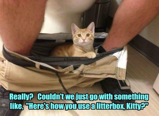 """Really?   Couldn't we just go with something  like,  """"Here's how you use a litterbox, Kitty?"""""""