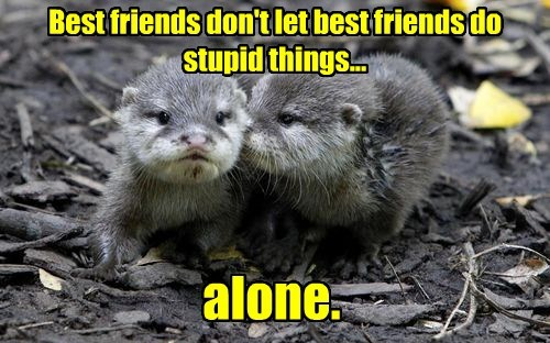 captions,cute,otters
