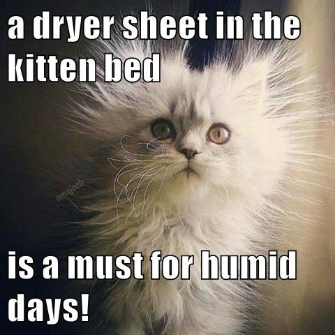 a dryer sheet in the kitten bed  is a must for humid days!