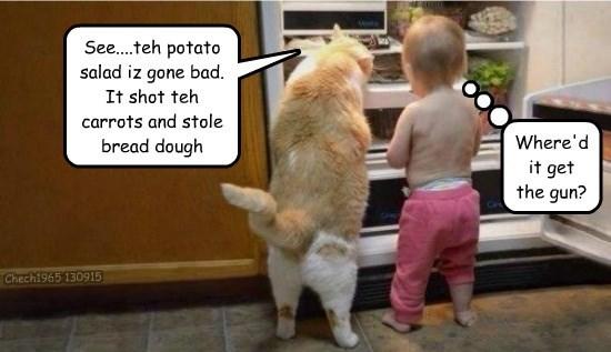 caption Cats funny - 8564580352