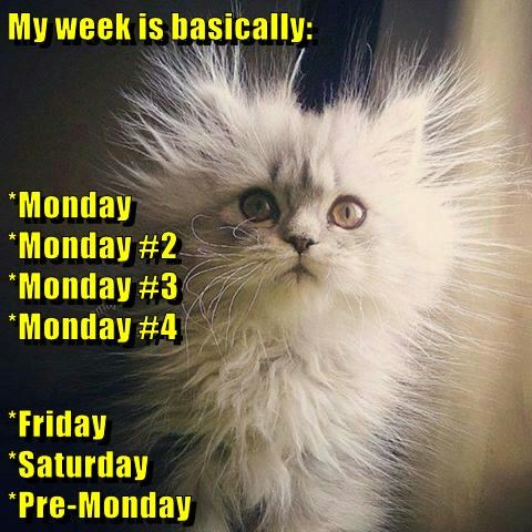 monday thru friday,static,mondays,caption,Cats,funny