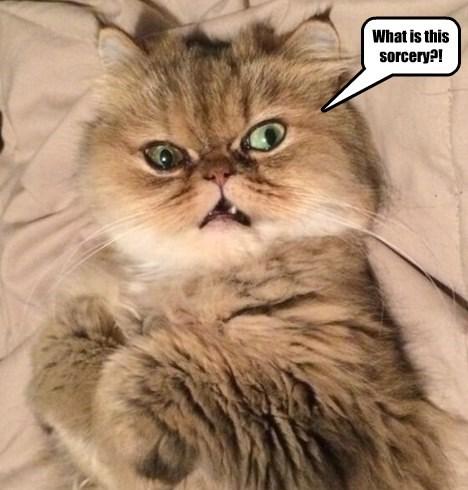captions cute Cats - 8564803840