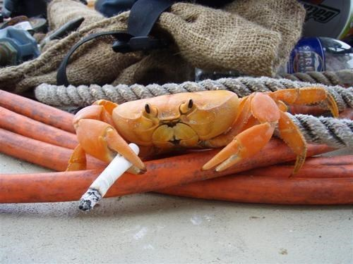 funny crabs image The Sailors Life Leads to All Sorts of Bad Habits