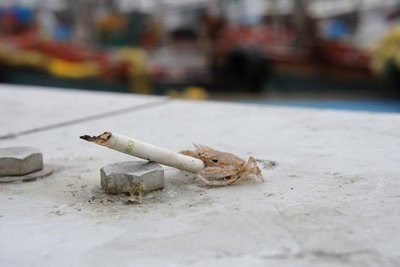 funny crabs image Aren't You a Little Young to Be Smoking, Tiny Crab?