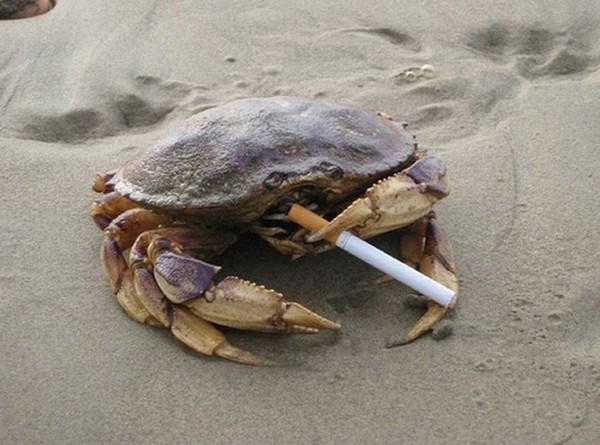 funny crabs image Hey, Gotta Light?