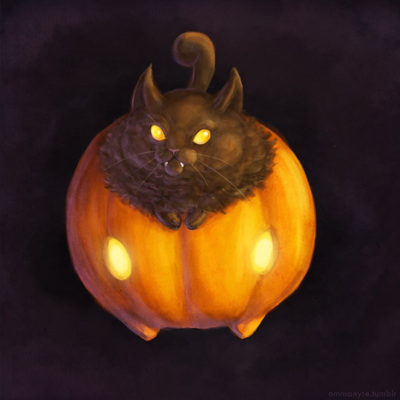 Pumpkapoo is a Cat on a Pumpkin