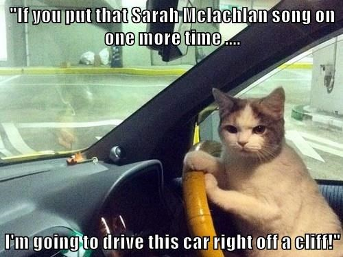 animals cat drive Sarah McLachlan cliff caption - 8564994560