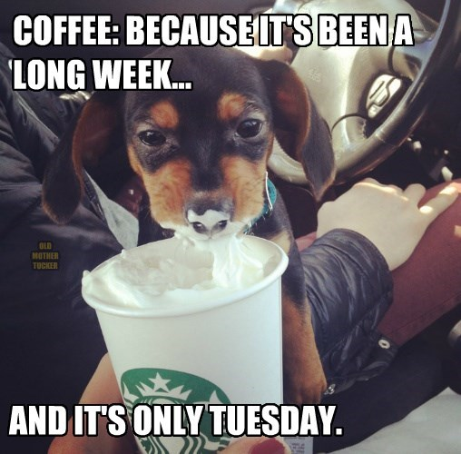 dogs captions coffee funny - 8565036544