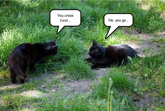 black cats captions Cats funny - 8565044224