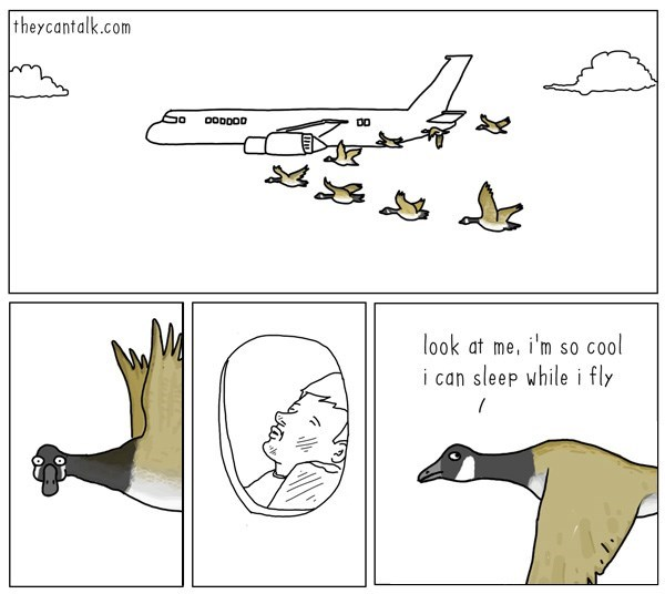 funny-web-comics-maybe-birds-arent-that-special