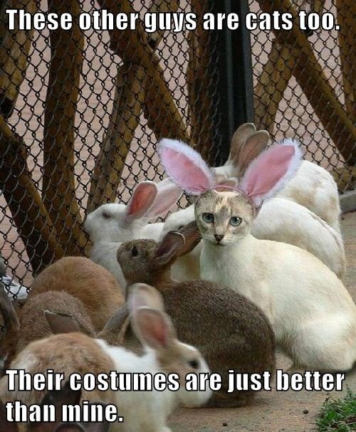 Rabbit - These other guys are cats t00 Their costumes are just better than mine.