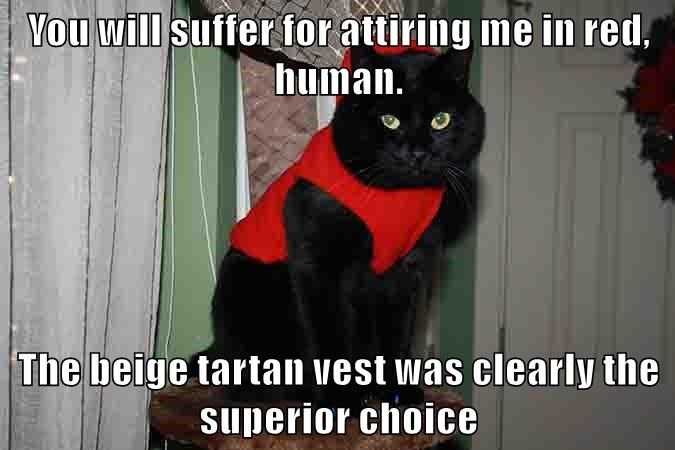 You will suffer for attiring me in red, human.  The beige tartan vest was clearly the superior choice