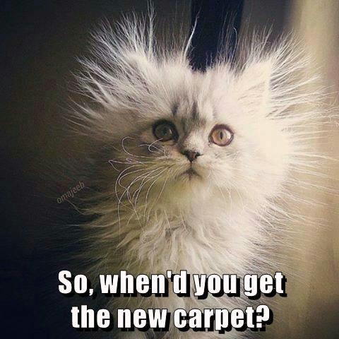 animals Cats caption carpet funny static - 8565488640