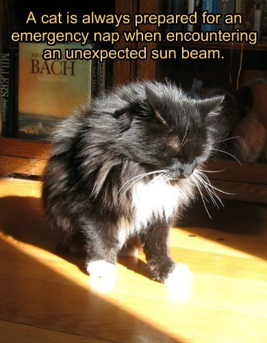 always cat caption emergency prepared sunbeam nap - 8565560576