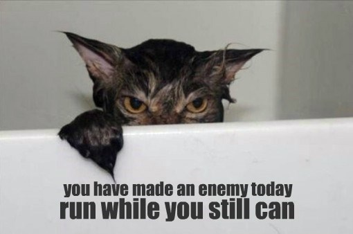cat caption enemy made run you