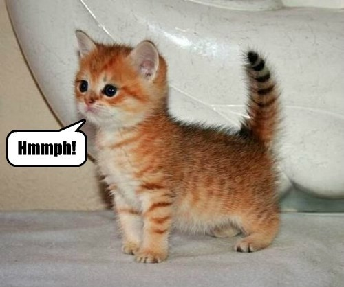 Baby Garfield Was A Pretty Kitten Lolcats Lol Cat Memes Funny Cats Funny Cat Pictures With Words On Them Funny Pictures Lol Cat Memes Lol Cats