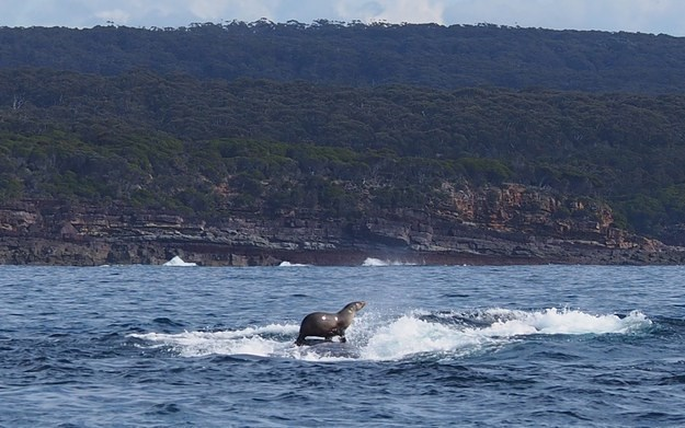 friendship seal whale ocean - 8565837568