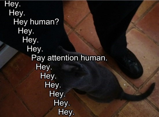 Hey.   Hey.     Hey human?       Hey.         Hey.           Hey.             Pay attention human.               Hey.                 Hey.                   Hey.                     Hey.                       Hey.                         Hey.
