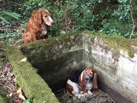 cute dogs rescue This Hero Dog Watched Over His Trapped Friend for a Week Until They Were Found and Rescued
