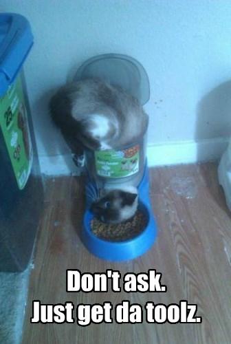 cat get dont ask tools caption - 8565926656