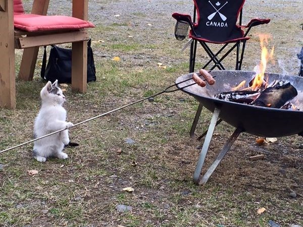 cute cats image Waiting Until the Hotdogs Are the Perfect Temperature to Knock Them on the Ground