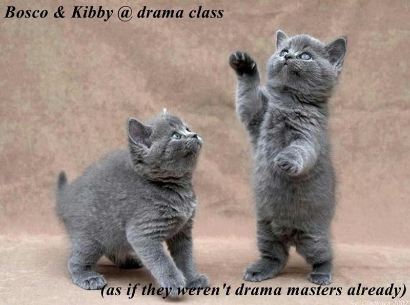 Bosco & Kibby @ drama class  (as if they weren't drama masters already)