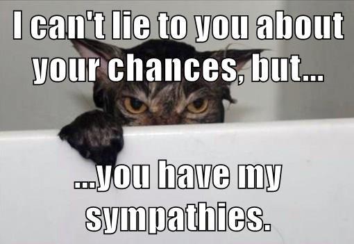 animals revenge bath caption Cats funny sympathy - 8566190336