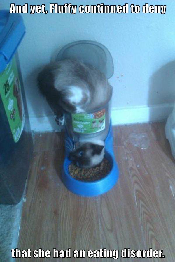 animals stuck food caption Cats funny - 8566313216