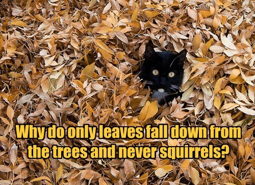 cat only squirrels not caption leaves why fall - 8566347008