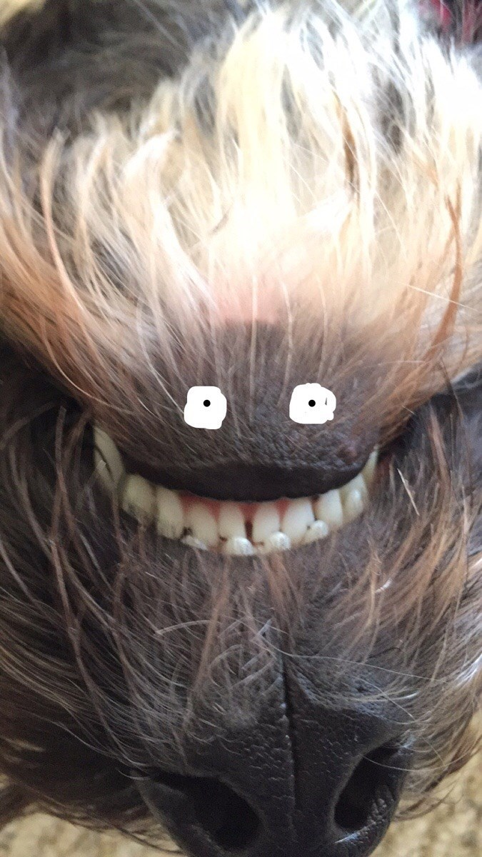 snapchat dogs image Do Those Eyes Seem a Little...Off to You?