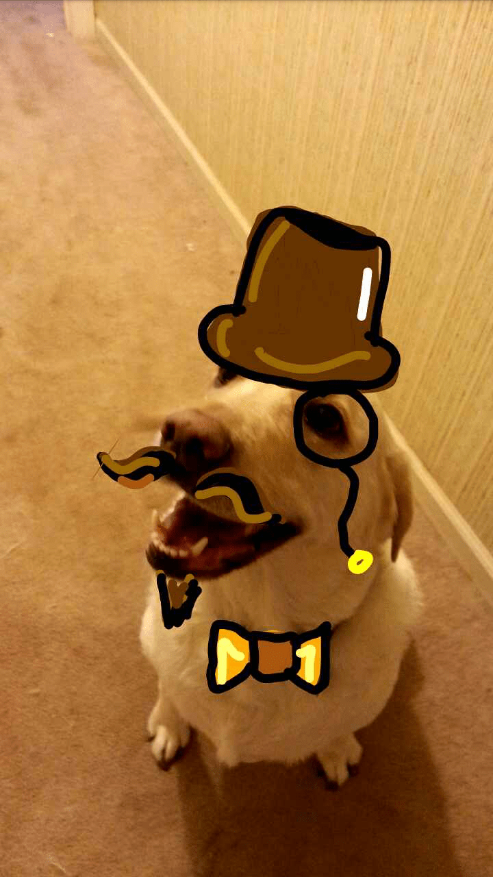 snapchat dogs cute Good Evening, Sir!
