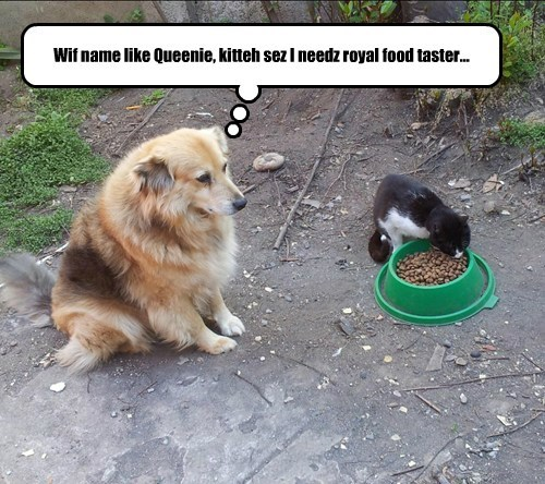cat dogs taster Queenie food caption royal - 8566489344