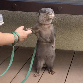 funny otters image Pleased to Meet You... I Suppose